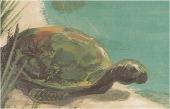 gardienne image tortue